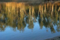 Reflections on the Murray.