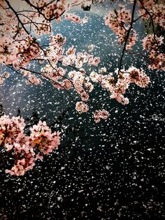 """Already the first branch-tips brush at the window. Softly, calmly, immensity taps at your life.""""  ― Jane Hirshfield"""