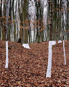 "Channelling the great walker-scupltor Richard Long, Welsh-born artist and photographer Zander Olsen is slowly wrapping the UK's woodland in white material. Tree, Line, Olsen says, not shy of a pun, is ""an ongoing series of constructed photographs rooted in the forest"" – one that explores the relationship between ""tree, not-tree and the line of horizon."" A frustratingly focussed website suggests Olsen has all of his time wrapped up (sorry) in this one project, but that's fine – these images…"