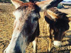 Preparing us for our trekking across Namibia Donkey, Trekking, Goats, Travel, Animals, Instagram, Viajes, Animales, Animaux