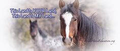 We are going to skip any discussion about the basics of the Bureau of Land Management (BLM) Wild Horse and Burro Program. Those are covered in other articles. Using the search bar you can type in k…