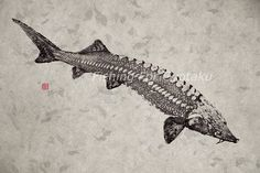 STURGEON gyotaku print Chou Zame  traditional by FishingForGyotaku