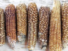 Through the careful work and collaboration of archaeologists, farmers, and food historians, the oldest maize variety on the continent is experiencing a revival in the American Southwest.