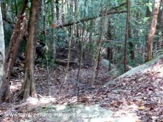 The most remote of all the beaches in Penang National Park is Teluk Kampi Beach, a long trek or boat ride from the park entrance . Hiking Trails, Trek, Entrance, Remote, National Parks, Boat, Plants, Entryway, Dinghy