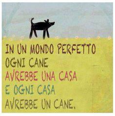 ... E ogni casa avrebbe un cane