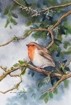 Robin Bird Painting by artist Sue van Coppenhagen