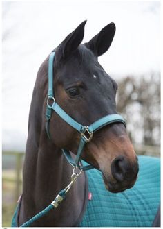 LeMieux ProSport Headcollar & Leadrope Peacock Green, Size Cob Western Riding, Horse Riding, Beautiful Horses, Animals Beautiful, Leather Halter, Horse Halters, Types Of Horses, Horse Quotes, Horse Photography