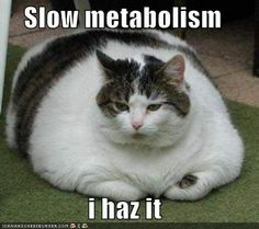 Heh!  This is how I feel after a pre race dinner.  Should I say carb load.