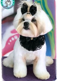 Dog Accesories, Pet Accessories, Dog Grooming Salons, Mobile Pet Grooming, Cute Baby Dogs, Dog Clothes Patterns, Pet Fashion, Dog Bows, Pet Costumes