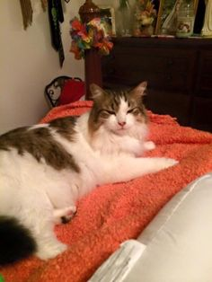 Patti Marconi HawkCT Animal Recovery Lost Cats in CT 5 hrs ·    Courtesy Post:  Missing my cat Pikachu! We live on alder lane in Southington. Any information please call Diane 860 212 9982. Please share.