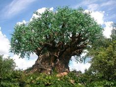 Disney world animal kingdom!