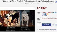 Profepa y Mercado Libre prevén controlar venta de animales por Internet