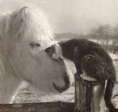 Why don't my cats ever get along with my horses like this?