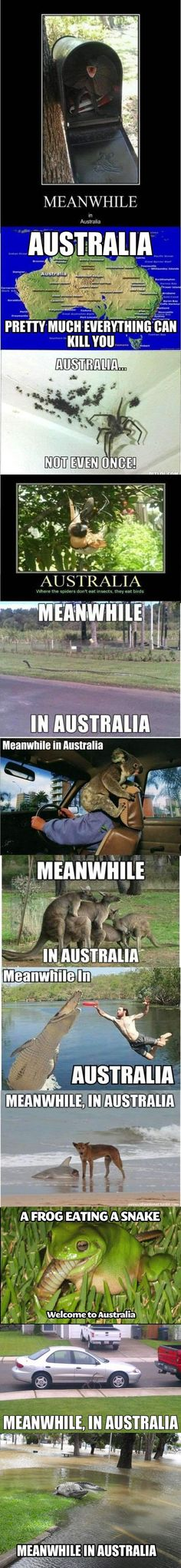 Meanwhile in Australia compilation… @Katie Schmeltzer Schmeltzer Lubins Yeah let's never go to Australia. EVER.