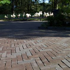 Penter Pavers allows you to create an outstanding aesthetic finish in your exterior and outdoor living spaces of your home and help to create a seamless and harmonious flow between your exterior and interior spaces.