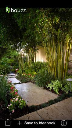 Bamboo and shrubs