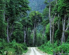 Chile - Carretera Austral I swear I will do a road trip along this road one day Freedom Travel, Andes Mountains, In Patagonia, Easter Island, Beautiful Places In The World, Trees To Plant, South America, National Parks, Places To Visit