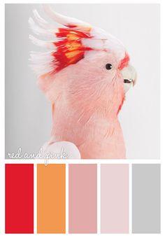 Color Palette for Je
