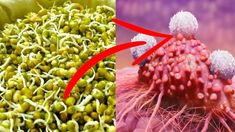 4 TBSP. A DAY AND CANCER IS GONE: Russian Scientist Reveals The Most Powerful Homemade Remedy – Our Organic House
