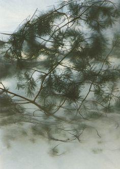 efedra:  Jon Nensén