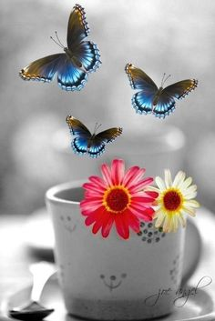 Splash of Colour Good Morning Coffee, Good Afternoon, Good Morning Good Night, Butterfly Kisses, Butterfly Wings, Beautiful Butterflies, Pretty Flowers, Color Splash, Color Pop