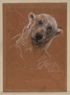Head of a Polar Bear by John Macallan Swan (English 1847-1910)