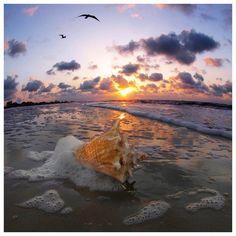 sea shore...shells