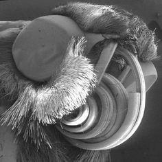 Microorganisms Under A Microscope