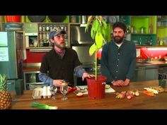 9 Plants That Easily Regrow from Kitchen Scraps | Best Regrowing Plants| 9 plants To Regrow Forever - YouTube
