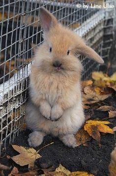 Bunnyyyyyyy :-)