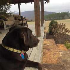 Christmastime on the farm is one of Riley's favorite things in the world! Investing In Stocks, Alabama, Labrador Retriever, Favorite Things, World, Funny, Dogs, Animals, Instagram
