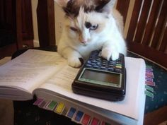 Here is a hilarious funny animal picture picdump Most of it consists of cute animals doing funny things. Some funny animal fails. Anyway, check out these 25 funny pics of funny animals. Funny Cat Memes, Funny Cats, Funny Animals, Cute Animals, Hilarious, Silly Cats, Crazy Cats, Cats And Kittens, Math Cats