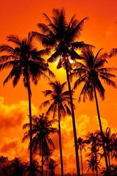 Orange Sunset iPhone Wallpaper HD