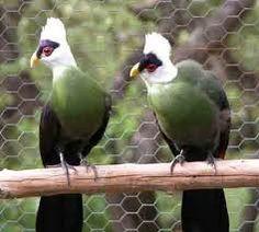 aves exoticas - Buscar con Google