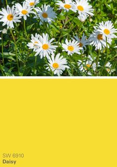 Sherwin-Williams yellow paint color – Daisy (SW 6910)
