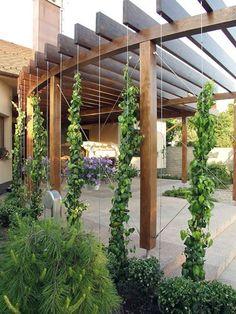 Slowakei Pergola | Tensile Design & Construct Tensile.com.au Architectural Landscape Design