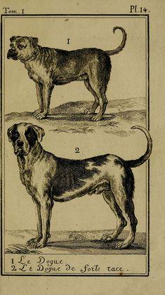 Histoire naturelle, générale et particulière, avec la description du Cabinet du roi. Tome I. Paris, De l'Imprimerie royale, 1750-1804.