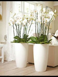 Use orchids, flowers and plants to decorate your home. Thirty five gorgeous ways to decorate with orchids, flowers, and plants. Indoor Floor Plants, Artificial Indoor Plants, Indoor Plants Low Light, Indoor Plant Pots, Best Indoor Plants, Indoor Planters, Diy Planters, Flower Vases, Flower Pots