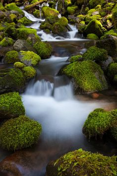 Rainforest Stream in Olympic National Park, Washington_ USA
