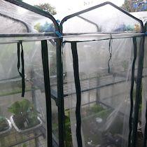 主無きベランダ菜園は ベランダ ベランダ菜園 水耕栽培