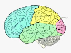 What I Learned Writing A Brain Blog For 17 Months