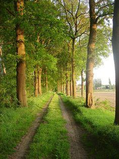 Landweggetje Tussen de Behelp en Sengersbroek in Heusden