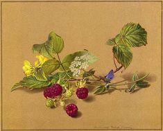 Ф.П.Толстой. Ветка малины, бабочка и муравей