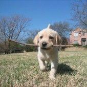 Kokosové rezy (fotorecept) - recept   Varecha.sk Smart Dog Toys, Outdoor Dog Toys, Kong Dog Toys, Labrador Retriever, Dogs, Animals, Labrador Retrievers, Animales, Animaux