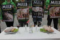 Performanssi sikojen puolesta Helsingissä 24.05.2013