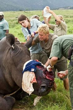 Badly injured rhino whose horn was taken after it was darted by poachers.... poachers need to go to hell