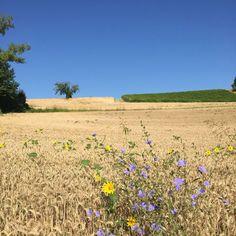Monferrato hills, Treville,italy