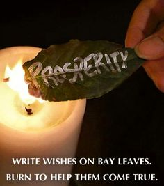 Tip: Bay Leaves for Wishes and a history of the herb ~ wicca herbs Reiki, Magick Spells, Voodoo Spells, Green Witchcraft, Healing Spells, Witch Spell, Practical Magic, Kitchen Witch, Book Of Shadows