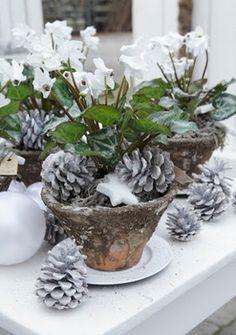 Shabby Look, Shabby Chic Style, White Christmas, Merry Christmas, Xmas, Christmas Floral Designs, Winter Diy, Ikebana, Pine Cones
