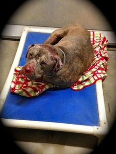 Suffering dog dumped at same California shelter that he was adopted from